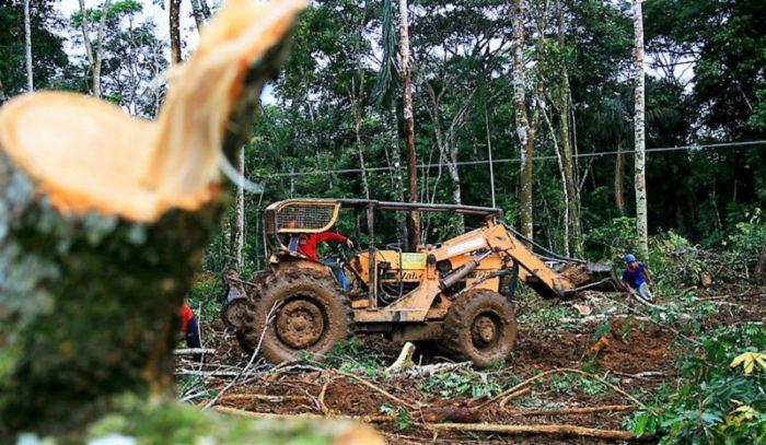Desmatamento na Amazônia é 60% maior que em 2018, diz Inpe