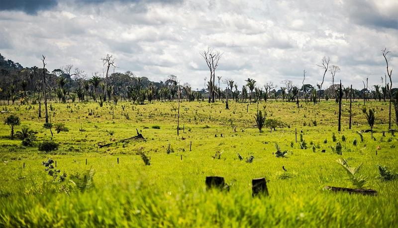 Degradação da Amazônia supera o desmatamento na região, diz estudo