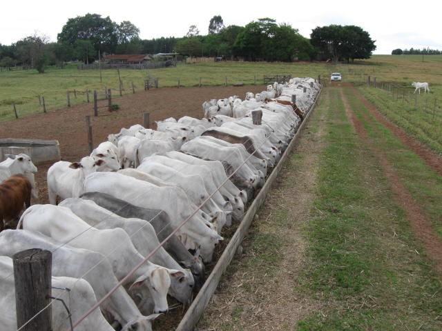 Nos devaneios de Bolsonaro, Amazônia vira pasto e indígenas, vaqueiros