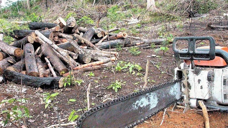 Justiça manda governo federal conter desmatamento na Amazônia