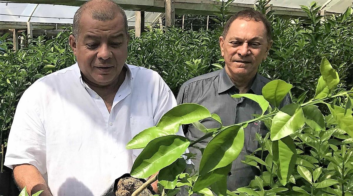 Plano diretor do Distrito Agropecuário