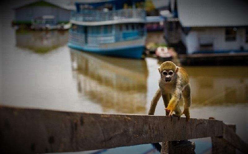 Exploração de animais no turismo é tema de audiência pública do MPF