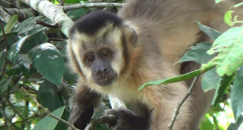 MPF debate exploração animais silvestres no AM