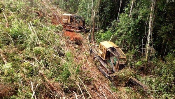 Governo diz que desmatamento maior no AM há em áreas da União