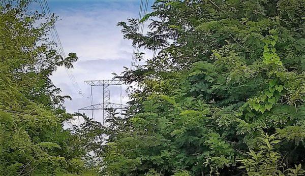 Funai reprova plano ambiental do linhão Manaus-Boa Vista