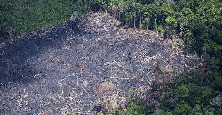 Amazonas registra o terceiro maior foco de queimadas na região