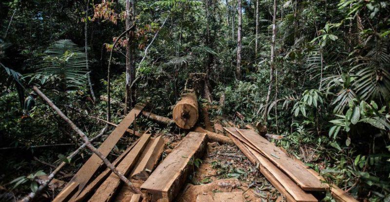 Fiscalização da prefeitura flagra crimes ambientais na RDS Tupé