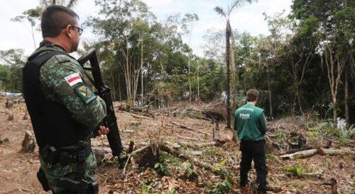 Ipaam registra aumento de 56% nas fiscalizações de crimes ambientais