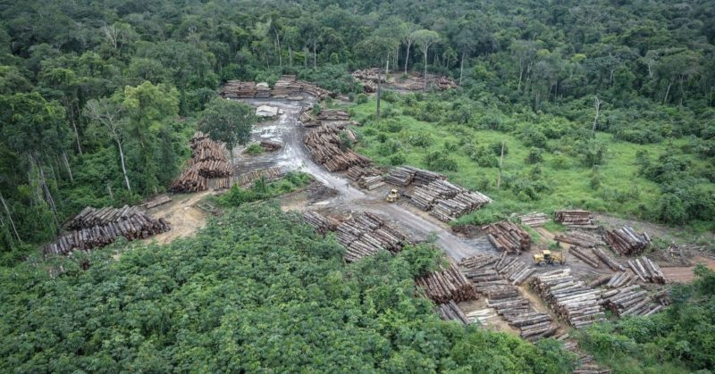 Grilagem responde por 35% do desmatamento na Amazônia, diz Ipam