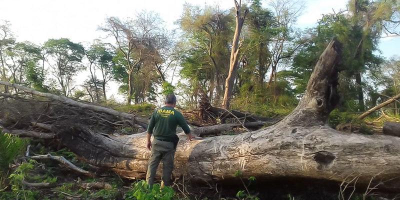 Alemanha congela R$ 155 milhões de projetos de preservação da Amazônia