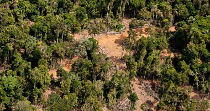 Operação de combate ao desmatamento na Amazônia está paralisada