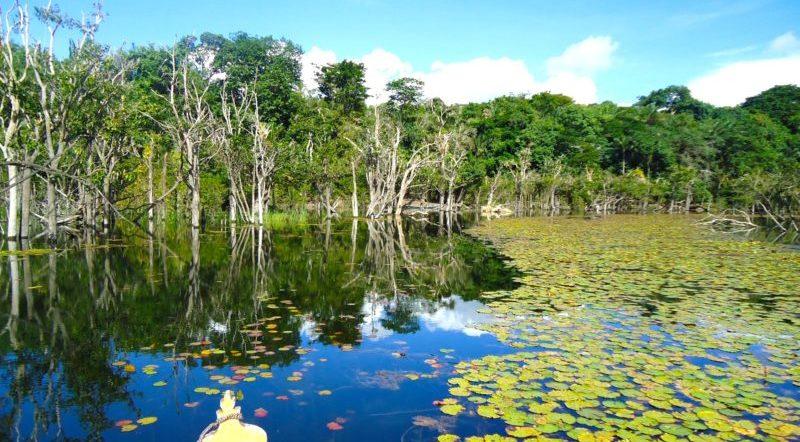 EUA reforçam promessa de criar Fundo Amazônia de R$ 404 milhões