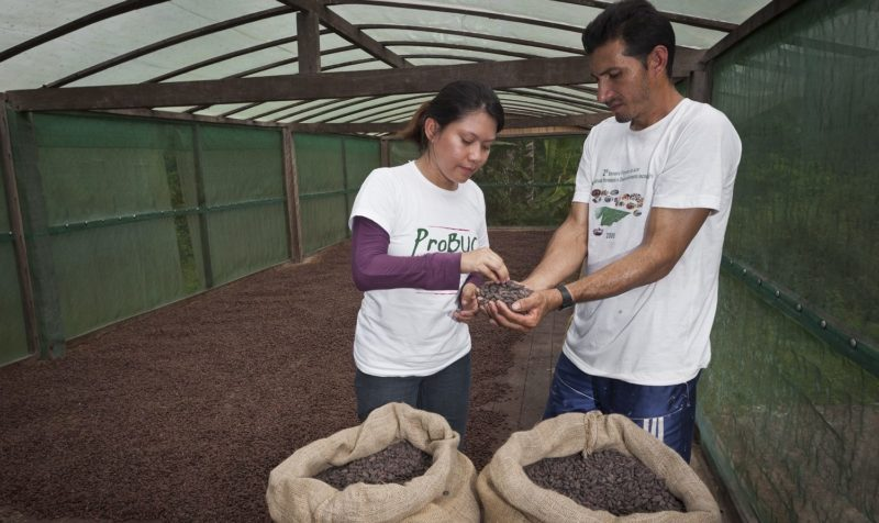 Conab compra sementes do pequeno agricultor familiar do Amazonas