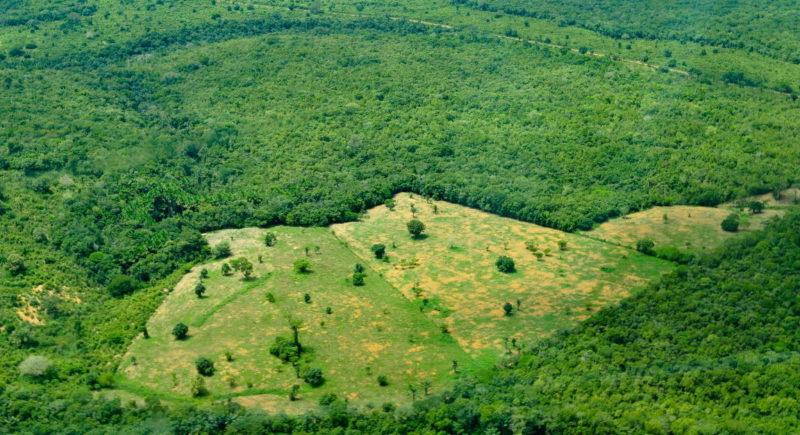 Governo cria Secretaria da Amazônia em meio às críticas internacionais