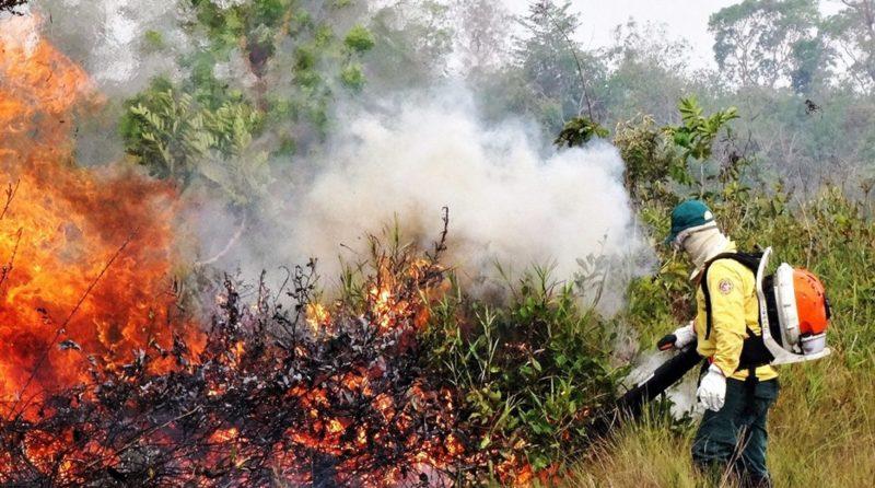 Primeira semana de setembro registra queda de queimadas no AM