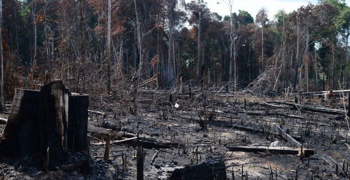 Desmatamento na Amazônia cresce 222% em agosto, registra Deter