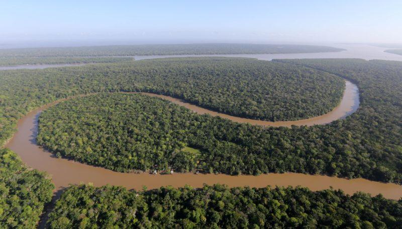 Cientistas descobrem, agora, o poder do poraquê da Amazônia
