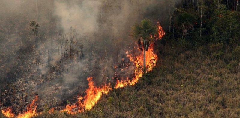 Queimadas caem 39% e Amazonas fica em sexto na Amazônia, diz Inpe