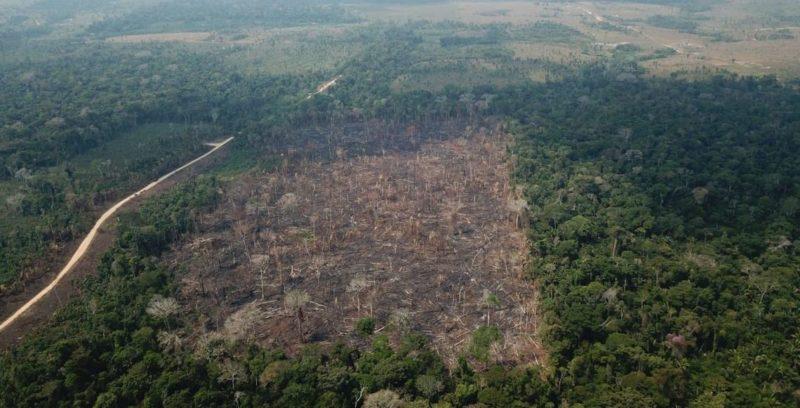 Devastação da Amazônia avança 80% em quatro meses, aponta Imazon