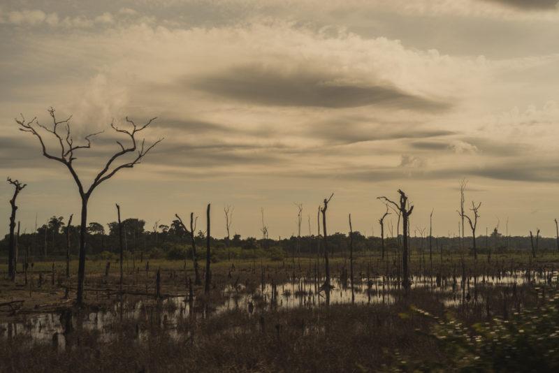Desmatamento em áreas públicas da Amazônia explode com Bolsonaro