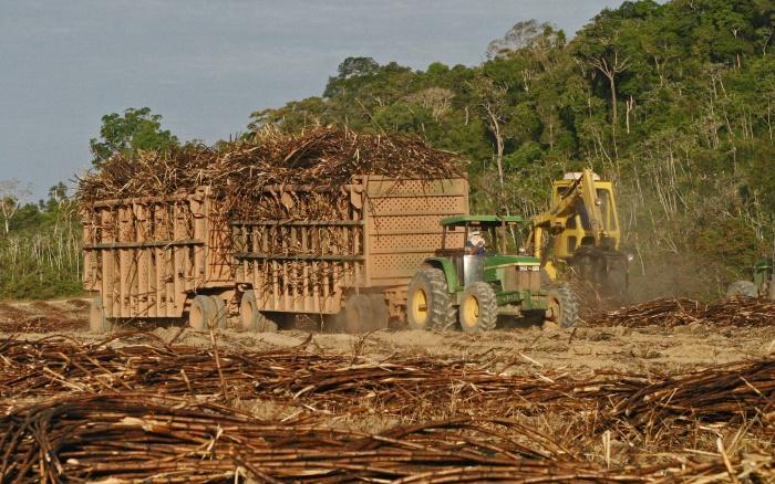 MPF quer reverter decisão do governo sobre cana-de-açúcar na Amazônia