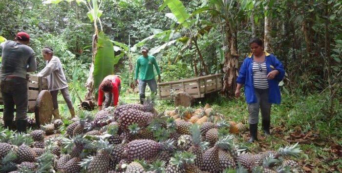 Amazonas receberá R$ 1,64 bilhão do Fundo Constitucional do Norte