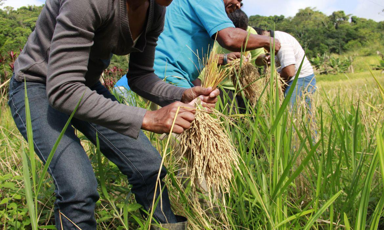 Governo edita medidas para garantir alimentação no país na pandemia