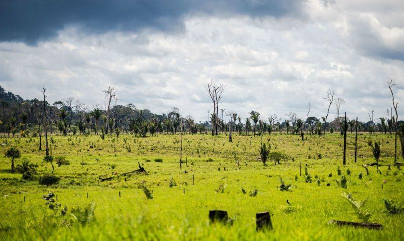 Corte no Inpe pode inviabilizar combate ao desmatamento na Amazônia