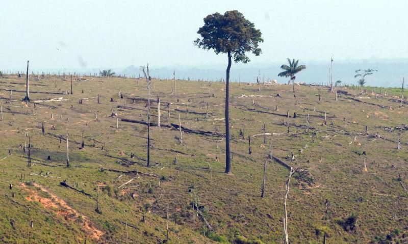 Amazonas tem três municípios na lista de desmatadores processados pela AGU
