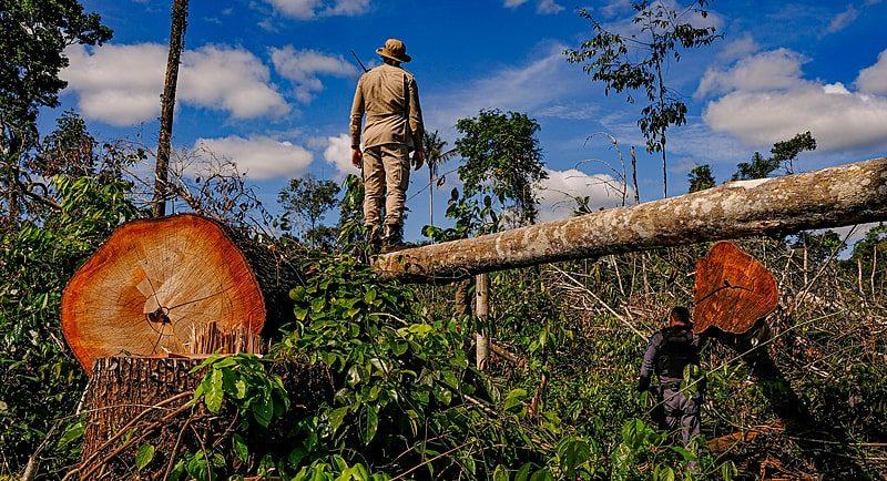 União bloqueia R$ 570 milhões em bens de desmatadores da Amazônia