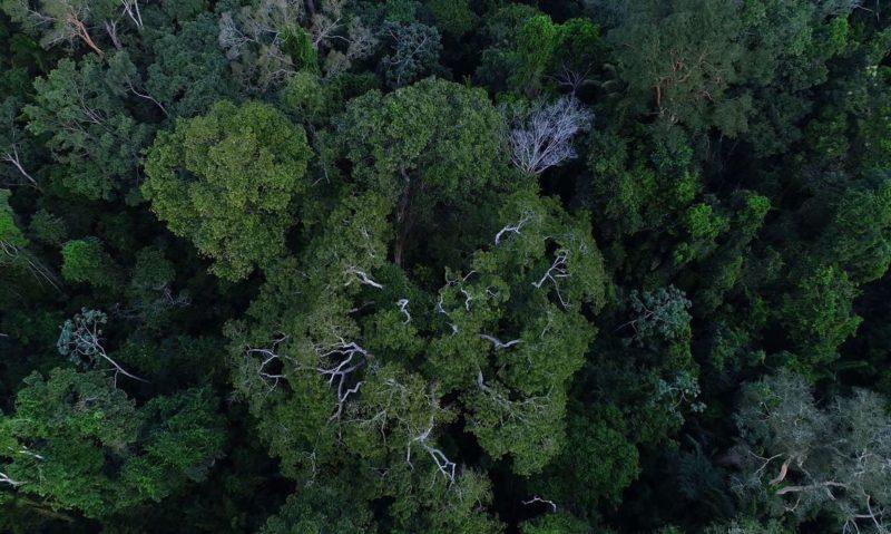Investimentos no Fundo Amazônia só voltam se Brasil reduzir queimadas
