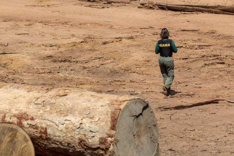 Amazônia teve aumento de 68% nos alertas de desmatamento