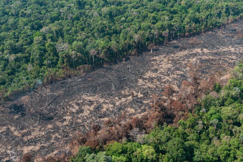 AGU quer R$ 893 milhões para garantir o ressarcimento aos danos na Amazônia