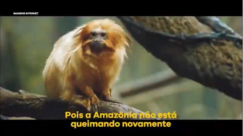 Mourão e ministro usam animal da Mata Atlântica sobre queimada na Amazônia