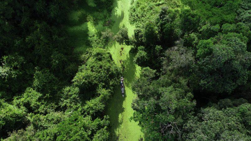 Projeto cria marco para exploração sustentável da Amazônia