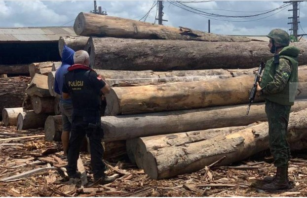 PF lembra do pau-brasil para culpar Europa pelo desmatamento atual