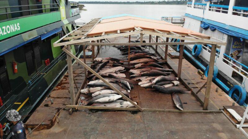 Cinco toneladas de pirarucu de Fonte Boa é apreendida na base Arpão