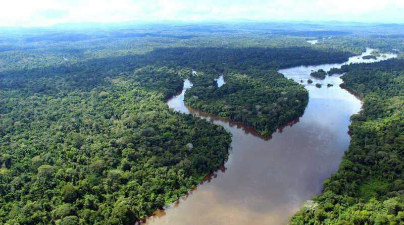 Ativistas latino-americanos debatem Emergências Amazônia pela web