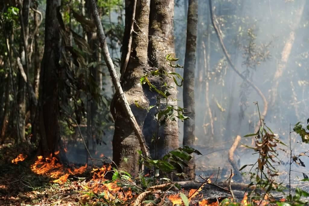 Áreas públicas da Amazônia no Amapá são vendidas a preços ínfimos