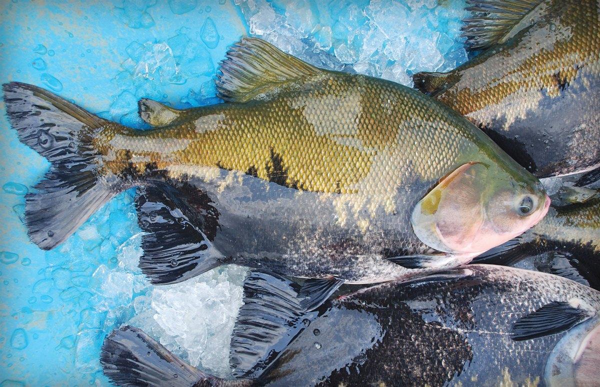 Criadores de peixes apostam em produção recorde em 2021