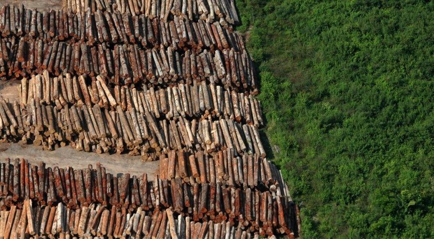 Cientistas acreditam que é possível reverter desmatamento na Amazônia