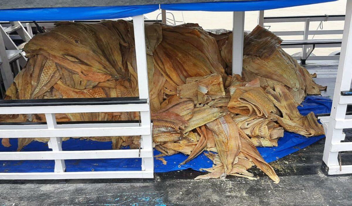 Ação do governo com Prefeitura de Coari apreende 16 t de pescado ilegal