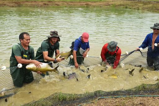 Piscicultores reúnem para discutir sobre o mercado de peixe de cativeiro